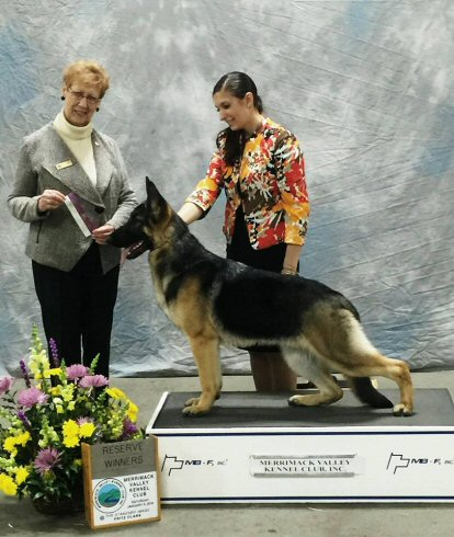 Trotter GSD 4 pt Major Reserve with Autumn handling.