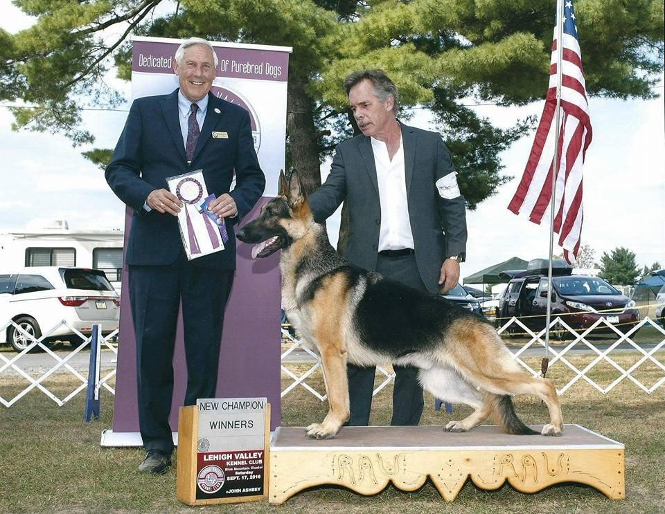 Trotter new German Shepherd Champion