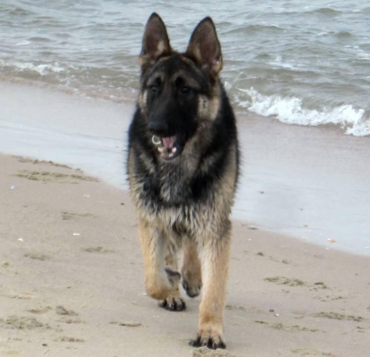 Aloha Florist Sacramento: 10 Most Popular Dog Breeds In The United States
